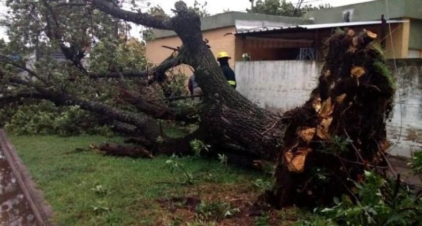 El Municipio intensifica trabajos de limpieza después de la tormenta