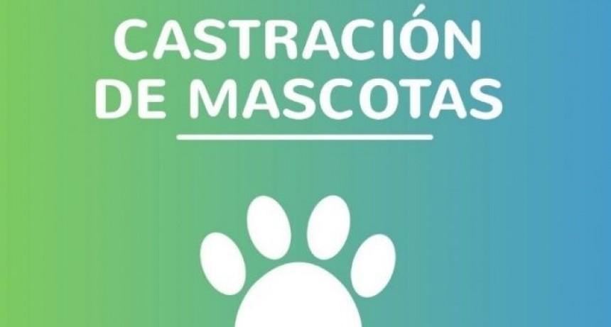Castración de mascotas en Barrio Don Pedro