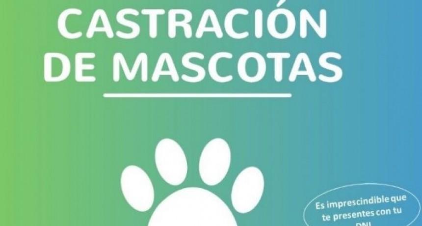 Castración de mascotas: el quirófano móvil llega a B° Belgrano