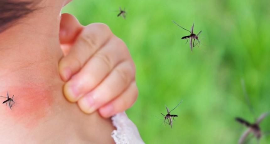 Alarma el número de casos de dengue en Reconquista