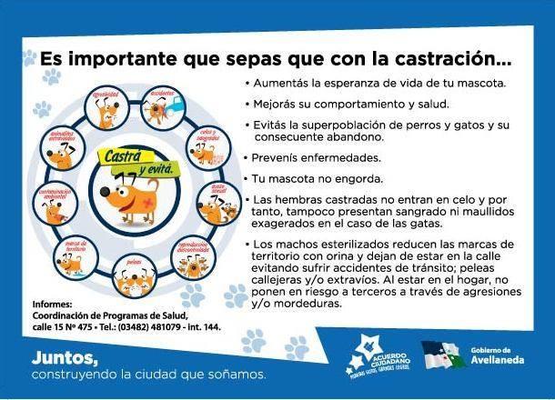 Continúa la campaña de castración de mascotas en Avellaneda