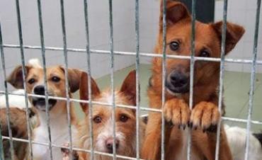 Refugio para animales abandonados en Reconquista