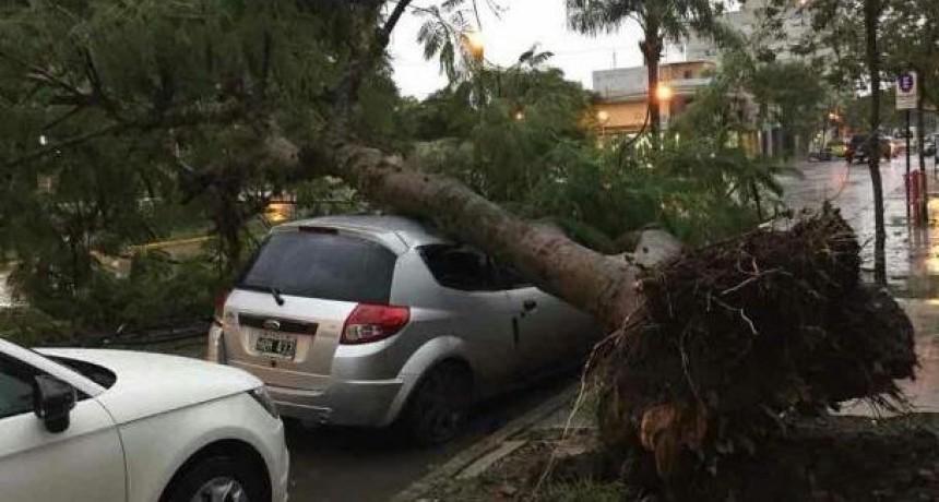 Cayó un árbol y aplastó un auto en pleno centro de Reconquista