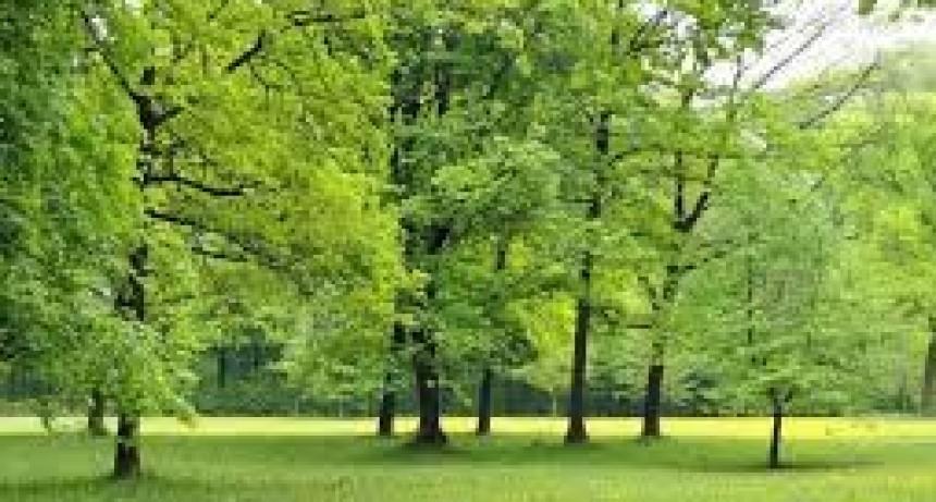 2ª Jornada de Arboricultura