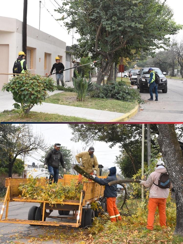 Poda de arbolado público en Avellaneda