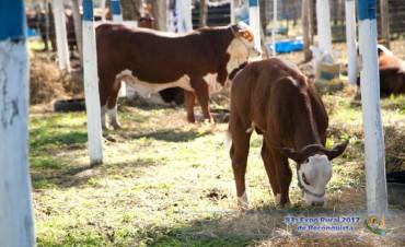 Expo Rural Reconquista: gran remate