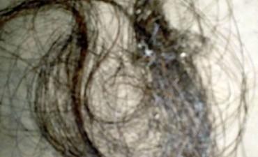 Encontraron pelo en un nido de pájaro y quieren saber si es de Rosalía