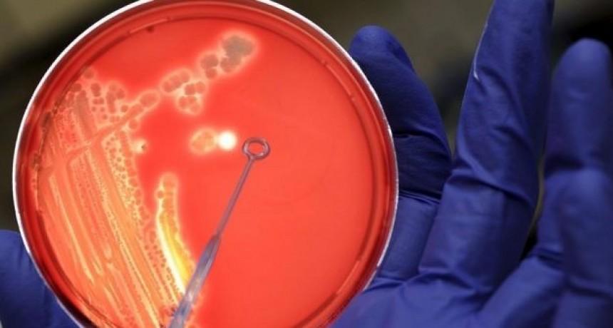 La provincia brindó información sobre la bacteria estreptococo pyogenes