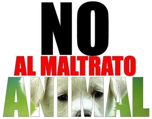 Maltrato animal: un hombre fue imputado por envenenamiento de una perra