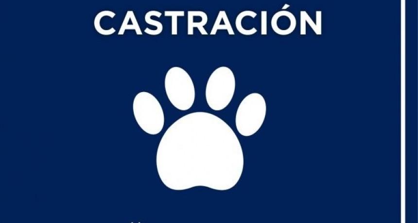 Castración de mascotas en Avellaneda