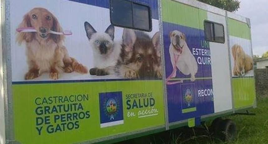 Operativo del área de zoonosis en Puerto Reconquista